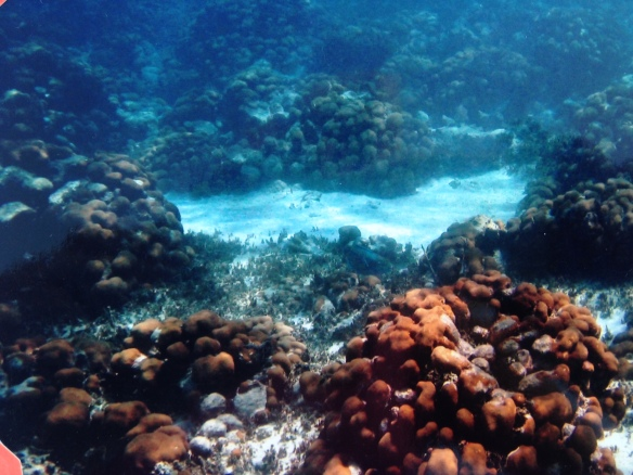 Sandy Island Coral