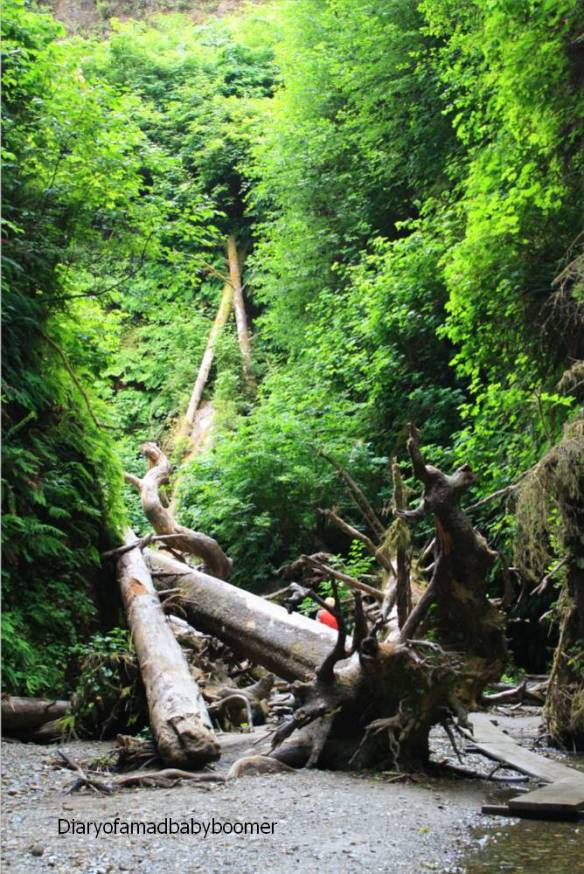Redwoodjunglegym