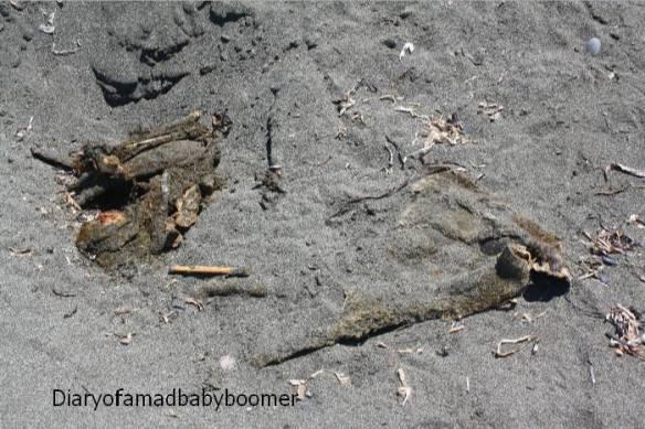 Elk Carcass