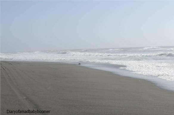 SeaOtteronbeach